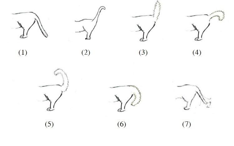 cat's body language , Understanding your cat's tail language