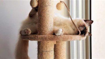 Creative Furniture Design Ideas Your Cat Will Love