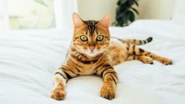 make indoor cats happy