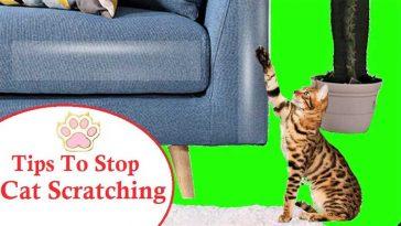 Stop Cat Scratching Furniture