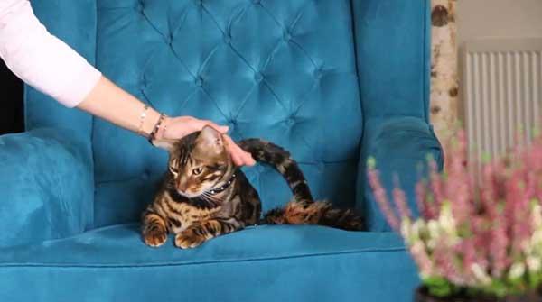 Get a cat sitter