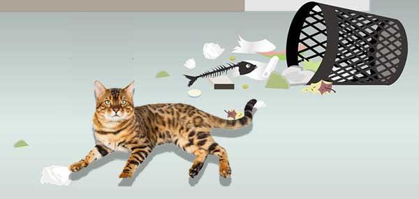 Bengal Kittens Health Problems - Garbage picking