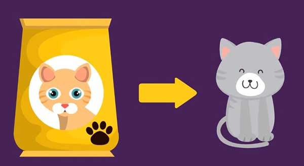 Cat Lose Weight - Adjust your cat's diet