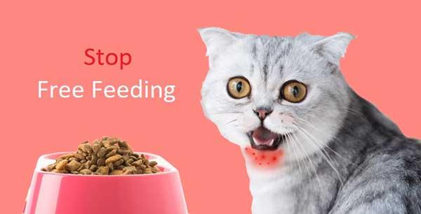 Cat Obesity - Stop free feeding