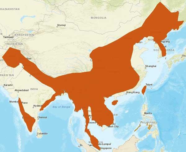 Distribution of Asian leopard cat