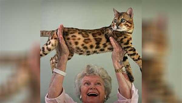 Jean Sugden Mill Bengal cat breeder